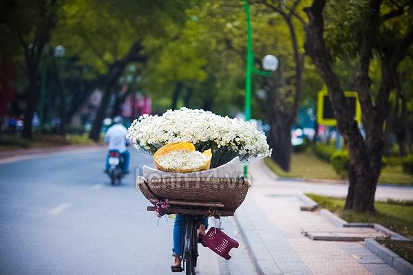 Ngỡ ngàng cúc họa mi đẹp tinh khôi trên phố Hà Nội 9