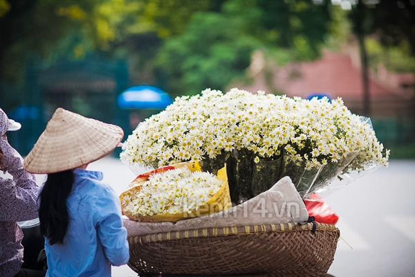 Ngỡ ngàng cúc họa mi đẹp tinh khôi trên phố Hà Nội 18