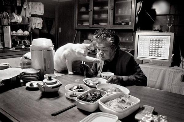 Bộ ảnh cảm động của cụ bà sống hạnh phúc cùng mèo   4