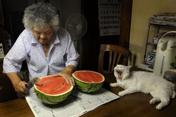 Bộ ảnh cảm động của cụ bà sống hạnh phúc cùng mèo   17