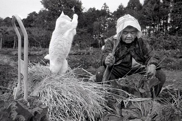 Bộ ảnh cảm động của cụ bà sống hạnh phúc cùng mèo   22