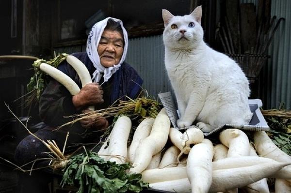 Bộ ảnh cảm động của cụ bà sống hạnh phúc cùng mèo   25