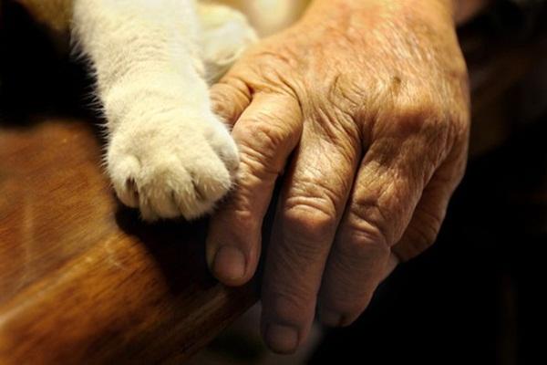 Bộ ảnh cảm động của cụ bà sống hạnh phúc cùng mèo   1