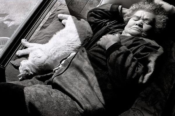 Bộ ảnh cảm động của cụ bà sống hạnh phúc cùng mèo   2