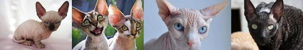 Hiểu tâm lý loài mèo qua tiếng kêu và hành động 15