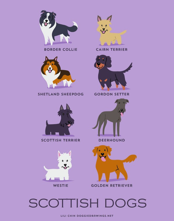 doggiedrawings6-f01a8.jpg