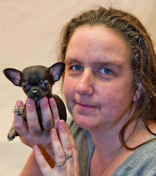 Gặp chú cún siêu tí hon nhỏ nhất nước Anh 4