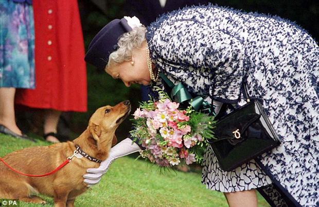 Câu chuyện đáng yêu về tiểu đội vệ binh toàn chó Corgi của Nữ hoàng Anh - Ảnh 10.