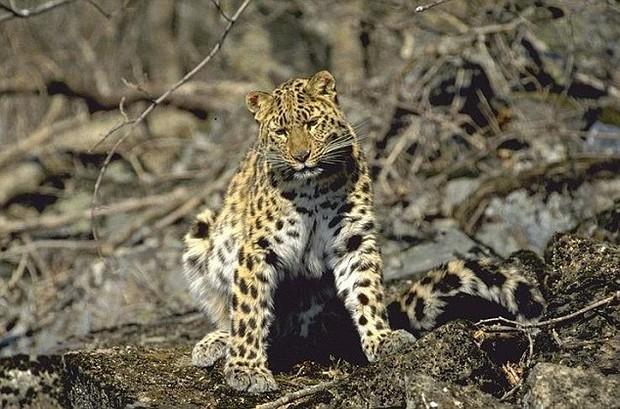 Báo động: 2/3 số động vật hoang dã trên Trái đất bị loài người hủy diệt trong 50 năm vừa qua - Ảnh 5.