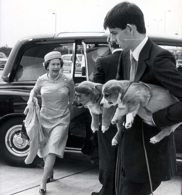 Câu chuyện đáng yêu về tiểu đội vệ binh toàn chó Corgi của Nữ hoàng Anh - Ảnh 3.