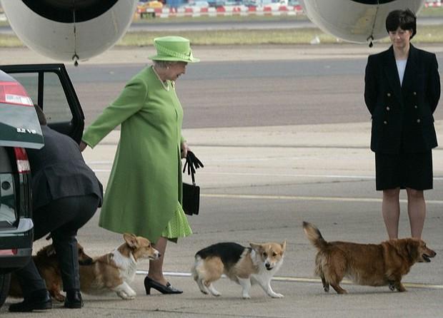 Câu chuyện đáng yêu về tiểu đội vệ binh toàn chó Corgi của Nữ hoàng Anh - Ảnh 2.