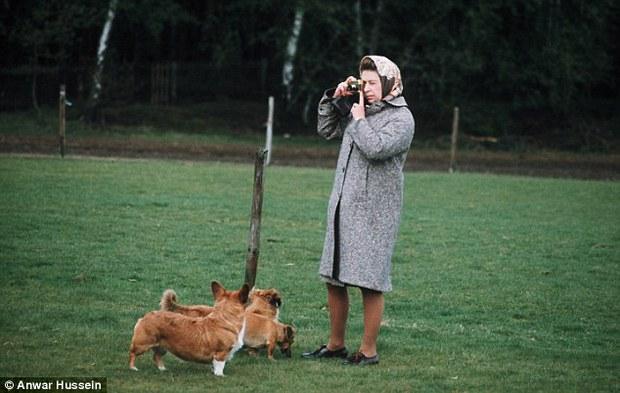 Câu chuyện đáng yêu về tiểu đội vệ binh toàn chó Corgi của Nữ hoàng Anh - Ảnh 8.