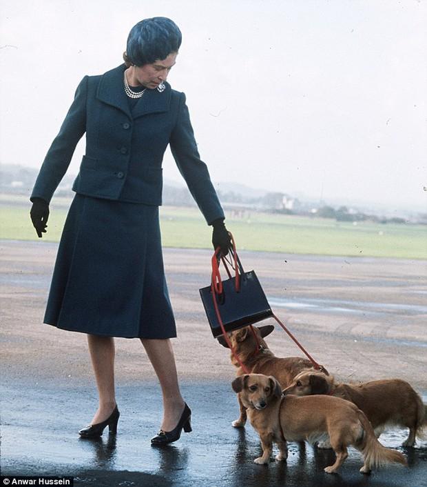 Câu chuyện đáng yêu về tiểu đội vệ binh toàn chó Corgi của Nữ hoàng Anh - Ảnh 4.