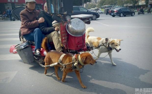 Đôi vợ chồng già chạy xe chó kéo gây sốt trên đường phố Trung Quốc - Ảnh 2.