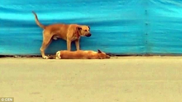 Khoảnh khắc chú chó rơi nước mắt vì cái chết của bạn thân - Ảnh 2.