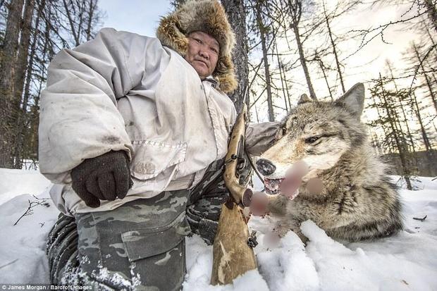 Theo chân những người thợ săn ở Siberia đi lột da chó sói - Ảnh 1.