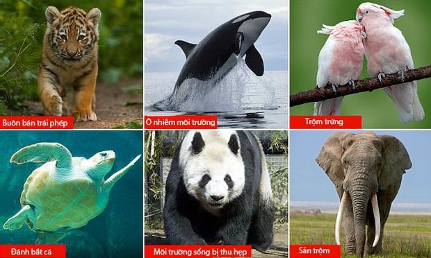 Báo động: 2/3 số động vật hoang dã trên Trái đất bị loài người hủy diệt trong 50 năm vừa qua - Ảnh 2.