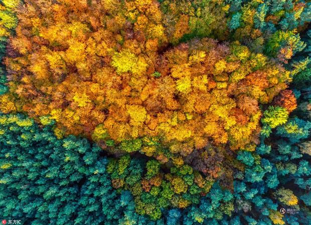 Những bức ảnh thiên nhiên tuyệt đẹp sẽ khiến bạn cảm thấy yêu mùa thu hơn bao giờ hết - Ảnh 1.