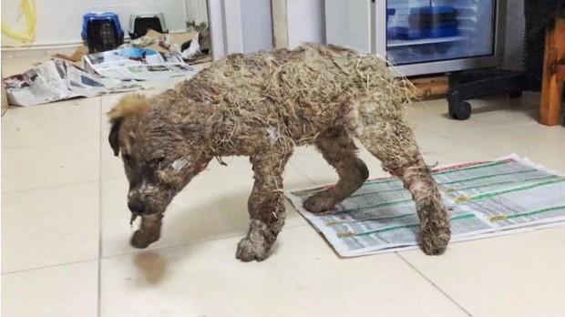Phẫn nộ cảnh chú chó con bị đổ đầy keo và bùn lên người để làm trò giải trí cho lũ trẻ - Ảnh 2.