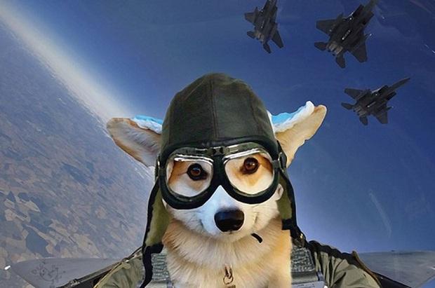 Đội mũ len quá dễ thương, chú chó Corgi đã bị các thánh chế ảnh cho lên thớt - Ảnh 2.