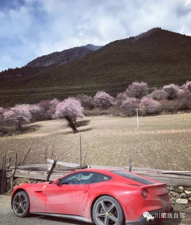 Cái kết cho đại gia lái Ferrari dẫn đoàn siêu xe đi khám phá cung đường nguy hiểm nhất Trung Quốc - Ảnh 13.