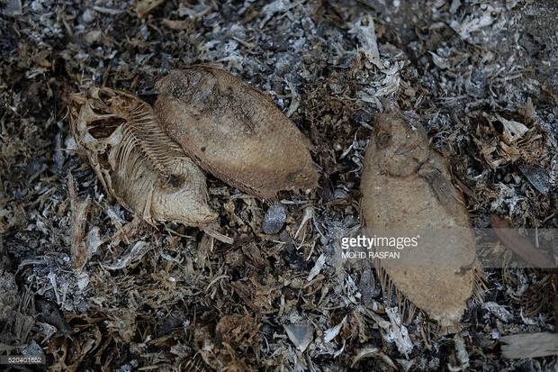 Chùm ảnh: Toàn châu Á vật vã đối phó với nắng nóng khủng khiếp - Ảnh 10.