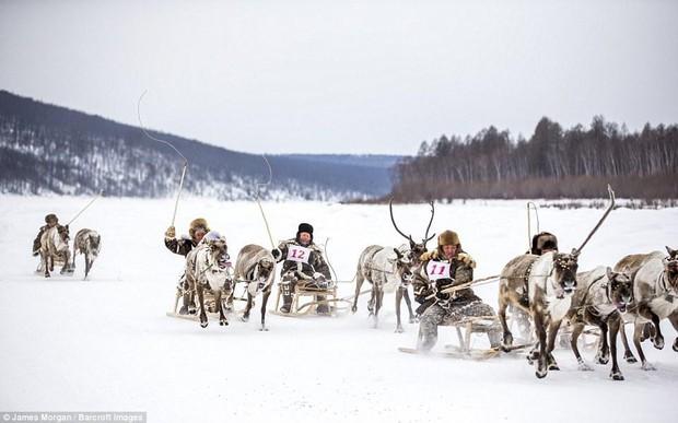 Theo chân những người thợ săn ở Siberia đi lột da chó sói - Ảnh 10.