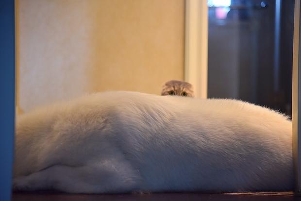 Nhà có một em cún nghịch, một bé mèo chảnh - cứ chí choé với nhau cũng phải! - Ảnh 7.