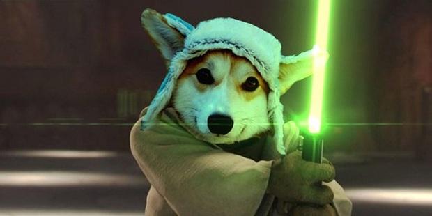 Đội mũ len quá dễ thương, chú chó Corgi đã bị các thánh chế ảnh cho lên thớt - Ảnh 20.