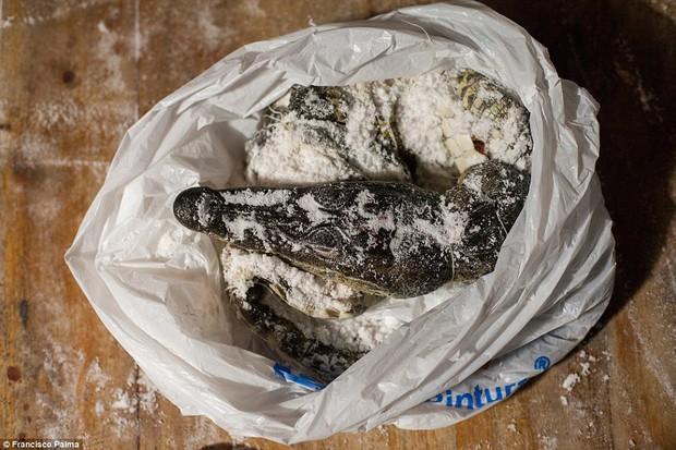Đằng sau những đôi giày da thời thượng là cả một quá trình lột da cá sấu sống rùng rợn - Ảnh 12.