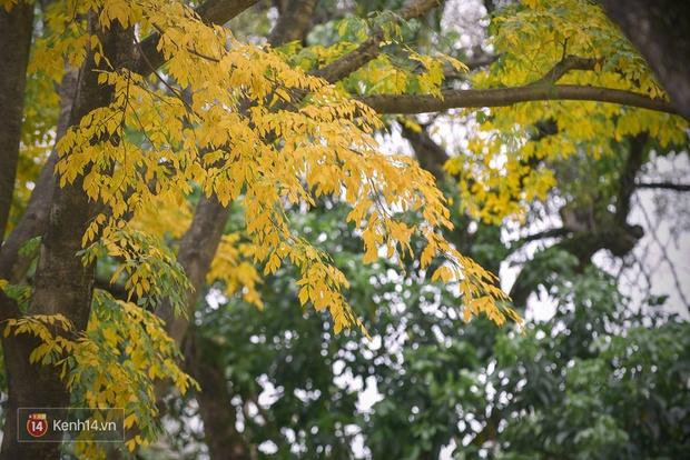 Ai nói Hà Nội không có mùa lá vàng, lá đỏ? - Ảnh 19.