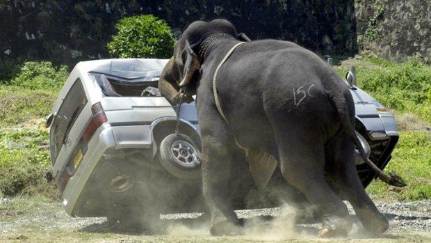 Câu chuyện đau lòng đằng sau những con voi hiền hòa tại Thái Lan - Ảnh 7.