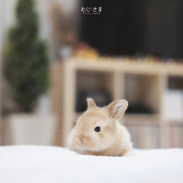 Gia đình nhỏ với trai đẹp, một em cún lúc nào cũng cười và hai chú thỏ lông xù siêu đáng yêu - Ảnh 28.