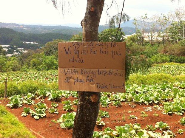 Vườn oải hương ở Đà Lạt đã phải đóng cửa vì hoa bị dập gãy bởi các bạn trẻ đến tham quan - Ảnh 5.