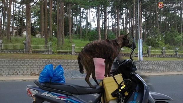 Cuộc sống hiện tại của thầy giáo nghèo Quảng Nam sau 19 ngày lặn lội Sài Gòn tìm chú chó Rex - Ảnh 3.