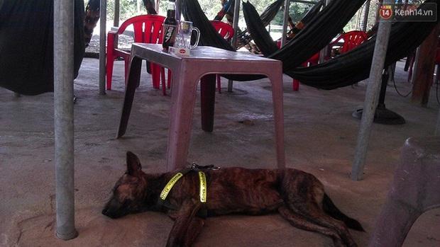 Cuộc sống hiện tại của thầy giáo nghèo Quảng Nam sau 19 ngày lặn lội Sài Gòn tìm chú chó Rex - Ảnh 9.