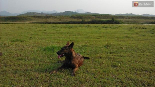 Cuộc sống hiện tại của thầy giáo nghèo Quảng Nam sau 19 ngày lặn lội Sài Gòn tìm chú chó Rex - Ảnh 4.