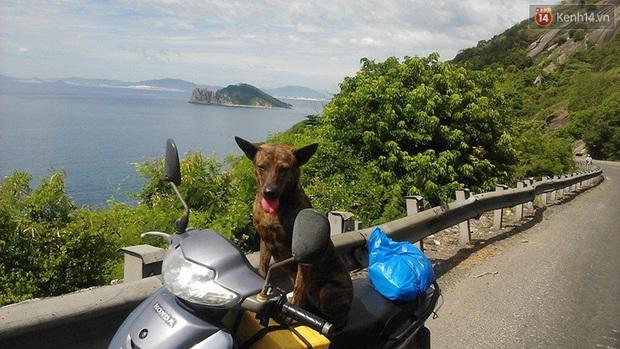 Cuộc sống hiện tại của thầy giáo nghèo Quảng Nam sau 19 ngày lặn lội Sài Gòn tìm chú chó Rex - Ảnh 2.