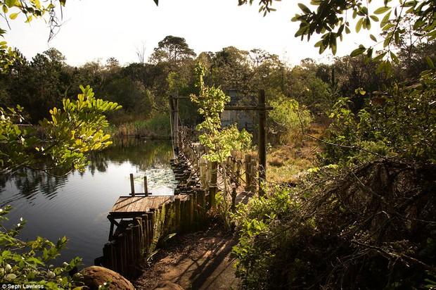 Hình ảnh ghê rợn bên trong công viên nước bỏ hoang 15 năm của Disney - Ảnh 14.
