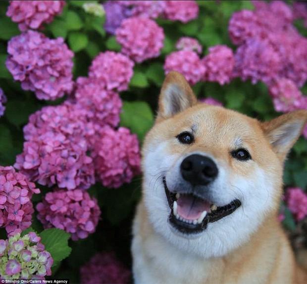 14 lý do chứng minh người yêu có thể không có nhưng chó nhất định phải có một con - Ảnh 5.