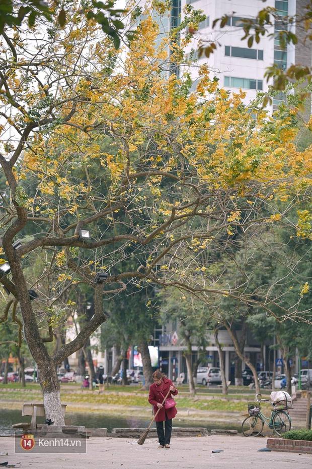 Ai nói Hà Nội không có mùa lá vàng, lá đỏ? - Ảnh 18.