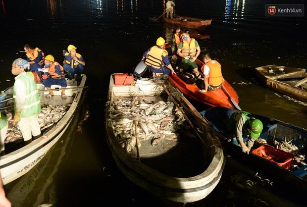 Hà Nội: Trắng đêm khắc phục hậu quả cá chết trắng ven hồ Tây - Ảnh 9.