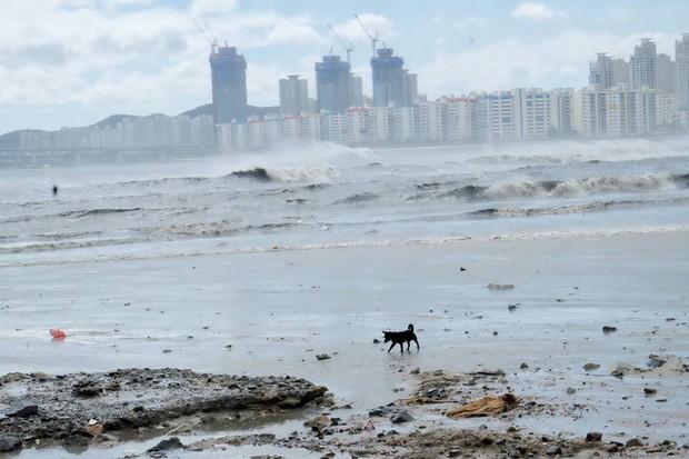 Cảnh tượng ngập lụt, đổ nát kinh hoàng sau bão tại siêu đô thị Busan của Hàn Quốc - Ảnh 17.