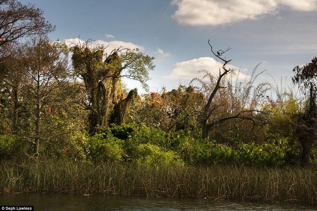 Hình ảnh ghê rợn bên trong công viên nước bỏ hoang 15 năm của Disney - Ảnh 15.