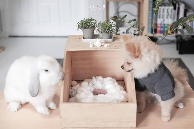 Gia đình nhỏ với trai đẹp, một em cún lúc nào cũng cười và hai chú thỏ lông xù siêu đáng yêu - Ảnh 30.