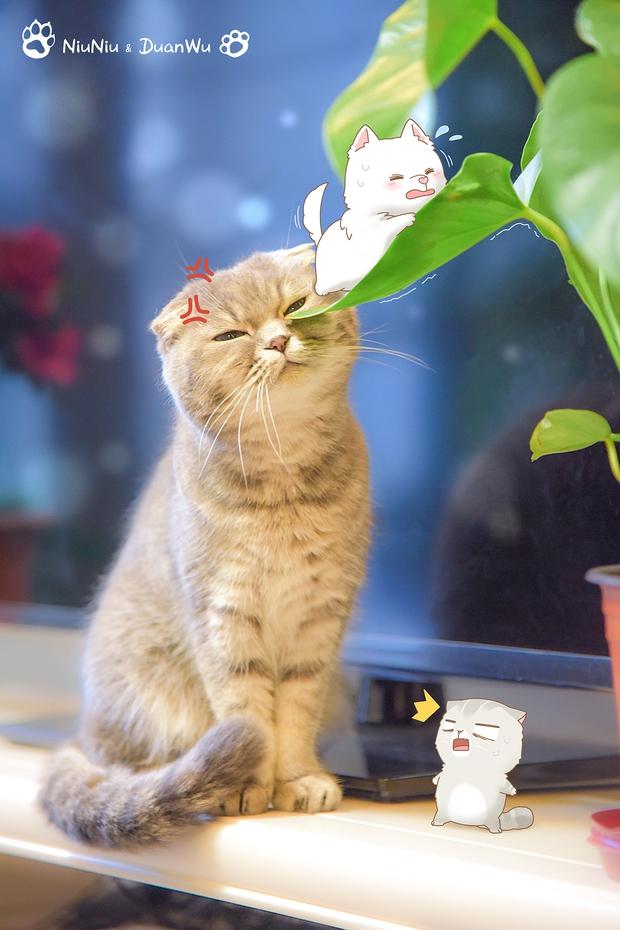 Nhà có một em cún nghịch, một bé mèo chảnh - cứ chí choé với nhau cũng phải! - Ảnh 17.