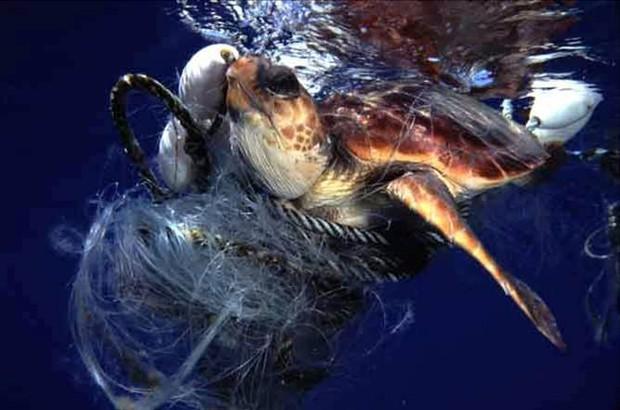 Phát minh kỳ diệu: thùng hút rác tự động trên đại dương - Ảnh 2.