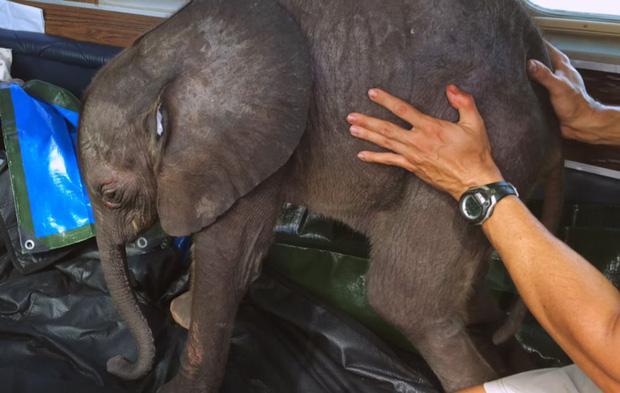 Người phụ nữ giàu lòng nhân ái nuôi voi như thú cưng trong nhà - Ảnh 3.