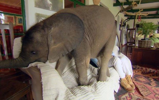 Người phụ nữ giàu lòng nhân ái nuôi voi như thú cưng trong nhà - Ảnh 5.