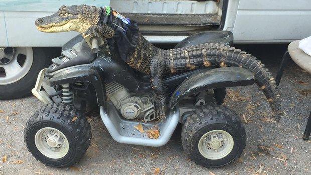 Dân chơi cá sấu mặc quần áo ngồi xe mô tô chất lừ - Ảnh 1.